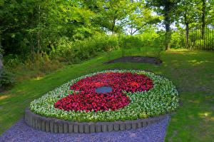 Фото Англия Парки Бегония Дизайн Chorley Природа