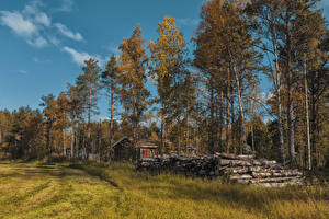 Картинки Финляндия Лапландия область Осенние Трава Деревья Бревна Ivalo Природа