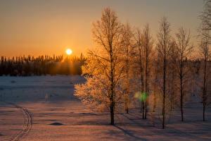 Фотография Финляндия Лапландия область Зимние Рассветы и закаты Снег Солнце Деревья