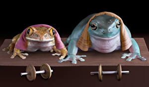 Фото Лягушки Полотенце 2 Гантели Смешные