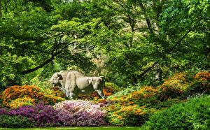 Картинки Германия Парки Американский бизон Рододендрон Скульптуры Кусты Ветвь Bremen Rhododendronpark Природа