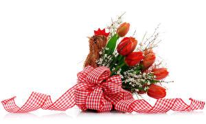 Обои Праздники Пасха Букет Тюльпаны Курица Белом фоне Лента цветок