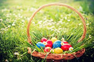 Фотография Праздники Пасха Ромашки Яйца Корзина