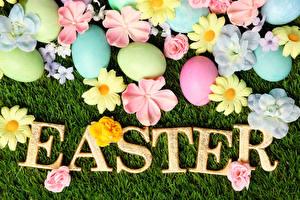 Картинка Праздники Пасха Ромашки Английский Яйца Трава