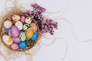 Фотография Праздники Пасха Цветной фон Яйца Дизайн Ветвь