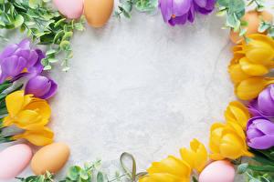 Фотографии Праздники Пасха Шафран Шаблон поздравительной открытки Яйца