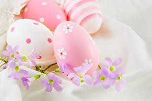 Фото Праздники Пасха Яйца Еда
