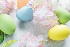 Фото Праздники Пасха Цветущие деревья Яйца