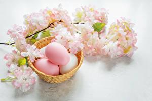 Фото Праздники Пасха Цветущие деревья Яйца Ветвь