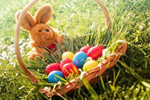 Картинки Праздники Пасха Кролики Трава Корзина Яйца