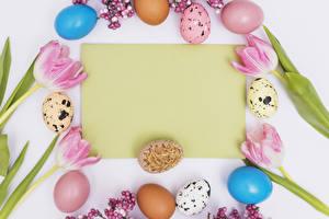 Картинки Праздники Пасха Тюльпаны Шаблон поздравительной открытки Белый фон Яйца
