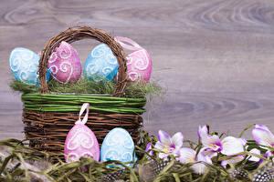 Фотография Праздники Пасха Корзина Яйца Дизайн