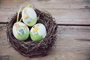 Фотографии Праздники Пасха Доски Гнездо Яйца Дизайн