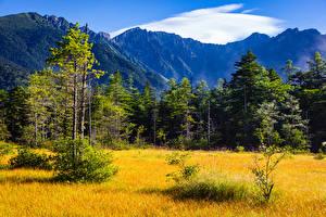 Фото Япония Горы Парки Леса Осенние Трава Shinshu Природа