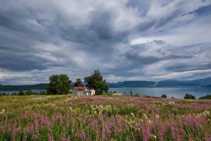 Картинка Норвегия Речка Здания Небо Поля Природа