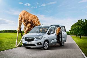 Картинки Опель Жирафы Забавные 2018 Combo Life Автомобили
