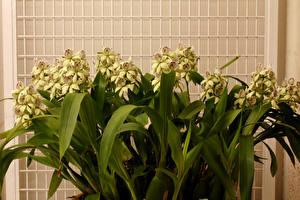 Фото Орхидеи Вблизи Желтый Цветы