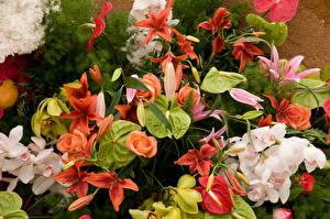 Обои Орхидеи Лилии Антуриум
