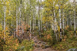 Картинка Парки Камни Березы Taganay National Park Ural Природа