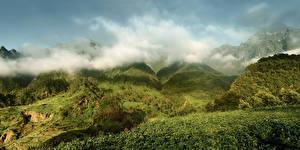 Фотография Португалия Горы Леса Луга Madeira Природа