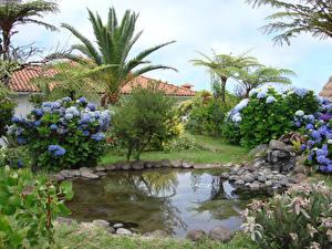Картинка Португалия Парки Пруд Гортензия Камень Пальмы Madeira Природа