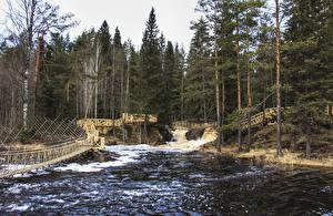 Обои Россия Леса Речка Водопады Мосты Ель Ruskeala Ahvenkoski Waterfall Karelia Republic