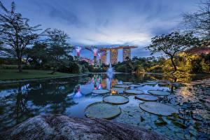 Фотографии Сингапур Вечер Парк Пруд Gardens by the Bay Природа