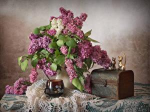 Фотография Натюрморт Букеты Сирень Кошки Чашка Цветы