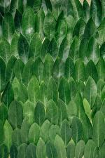 Фотография Текстура Листья Зеленый Leaves Природа