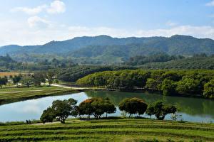 Фото Таиланд Леса Речка Деревья Chiang Rai Природа
