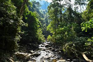 Фото Таиланд Тропики Леса Камень Деревья Ручей Pala-U Waterfall Природа