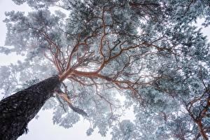 Картинка Деревья Ствол дерева Вид снизу Ветвь Природа