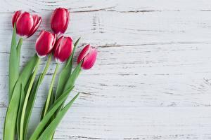 Обои Тюльпаны Цветы картинки