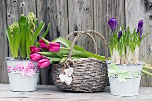 Фото Тюльпаны Крокусы Доски Корзина Цветы