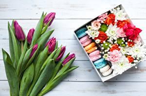 Картинки Тюльпаны Макарон Цветы