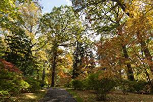 Обои США Парки Осень Деревья Кусты Листья Winterthur Delaware Природа