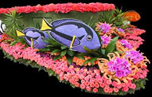 Фотография США Парки Рыбы Розы Орхидеи Калифорния Дизайн Pasadena Цветы
