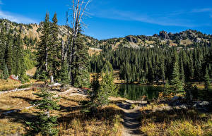 Обои Штаты Парки Озеро Горы Ель Sheep Lake Rocky Mountain National Park