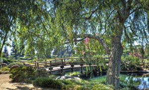 Обои Штаты Парки Пруд Мост Калифорния Лос-Анджелес Дерева Кусты HDRI Природа