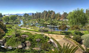 Фото Штаты Парки Пруд Камень Лос-Анджелес Дизайн Деревья Кусты Природа