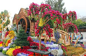Картинки Штаты Парки Роза Утки Бабочки Калифорнии Дизайна Pasadena Природа