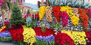 Обои Штаты Парки Розы Ирисы Тюльпаны Герберы Калифорния Дизайн Pasadena Цветы