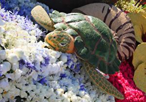 Фотография Штаты Парки Розы Черепахи Калифорния Дизайн Pasadena Природа
