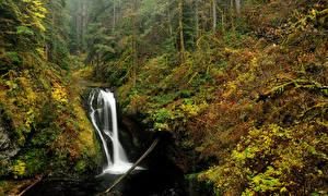 Картинки США Водопады Осенние Леса Oregon