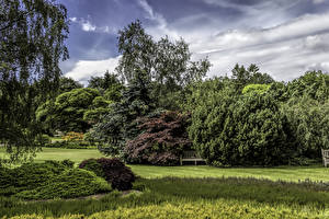 Фотографии Великобритания Парки Газон Кусты Garden Harlow Carr Природа