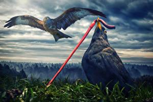 Обои Птица Полет Крылья Смешные Животные