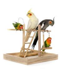 Картинки Птицы Попугаи Белый фон