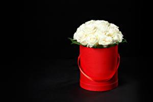 Обои Букеты Розы Черный фон Белый Цветы