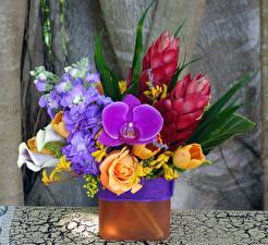 Фото Букеты Розы Орхидеи Маттиола Белокрыльник Ваза