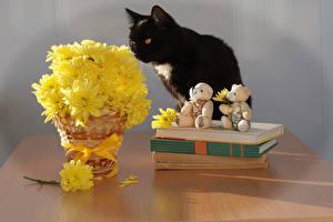 Картинка Коты Хризантемы Книга Корзина Животные Цветы
